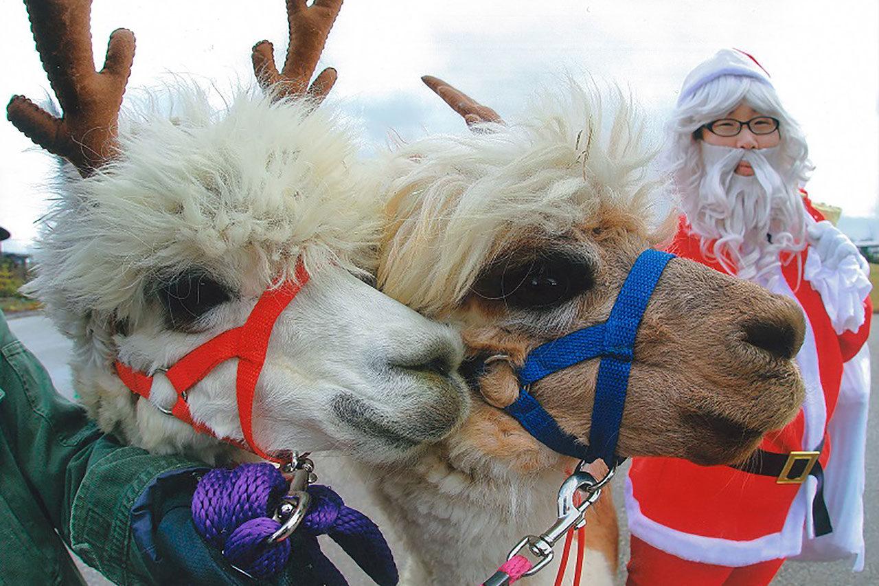 今年もサンタがやってくる!「いくとぴあ食花 クリスマスフェスタ」開催