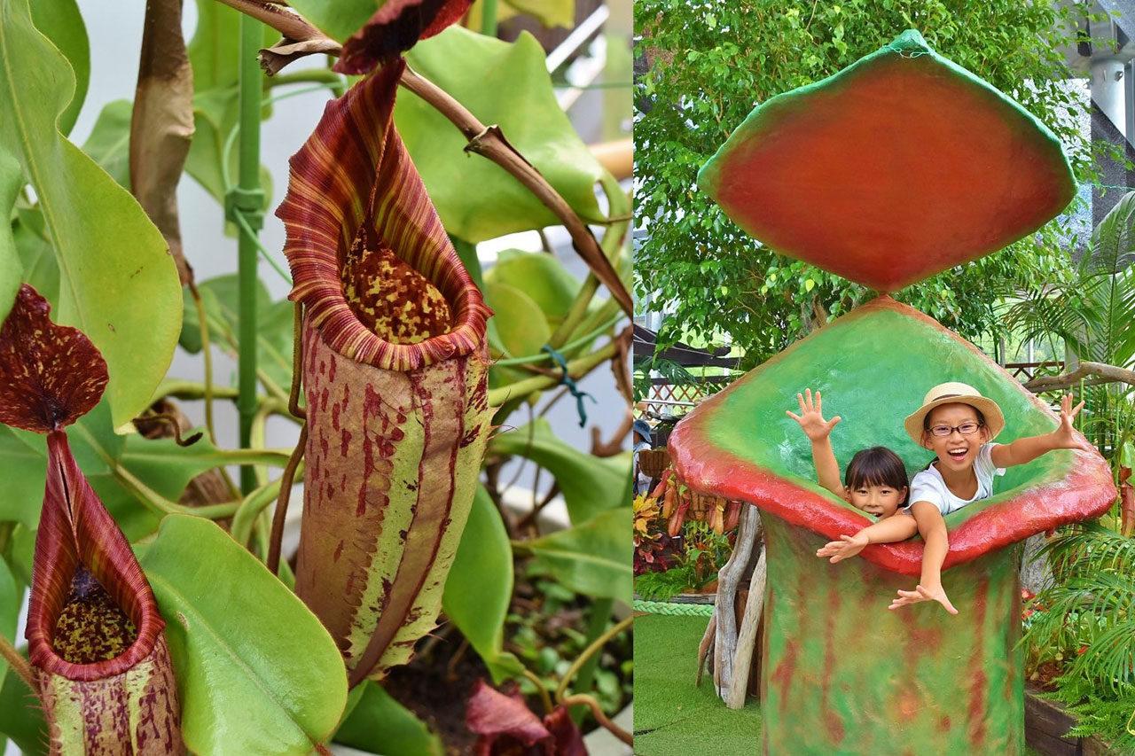 夏の企画展示「虫を食べる技を持つ 食虫植物展」開催中!
