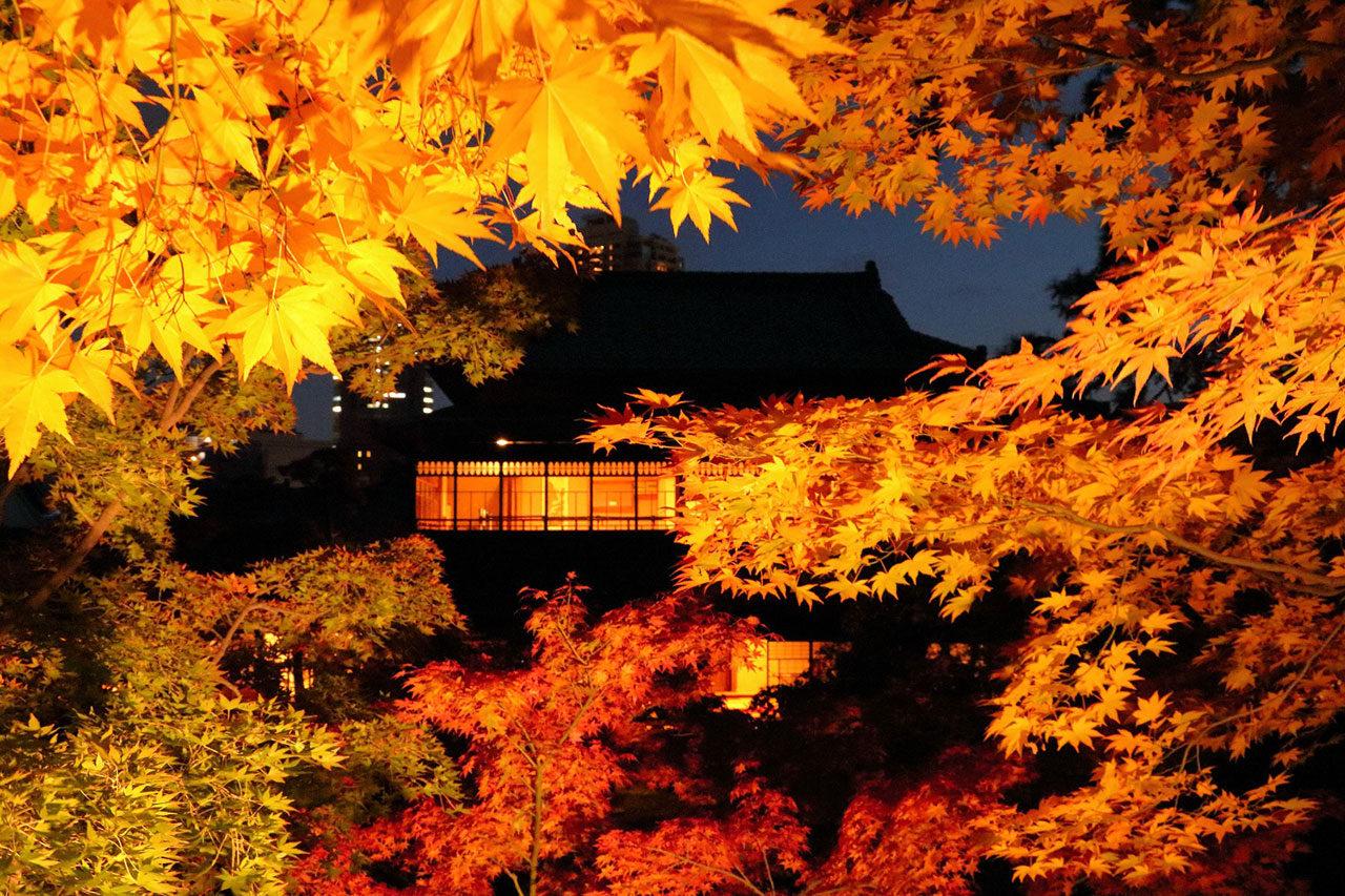 吉田建具製作所とのコラボレーション「組子建具展×秋の庭園ライトアップ」開催
