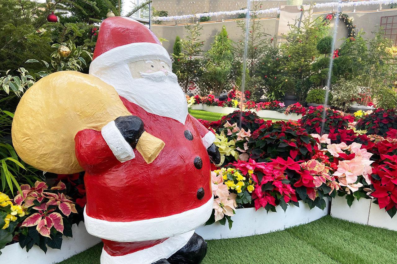 新潟県立植物園にて企画展示「クリスマス展」開催中